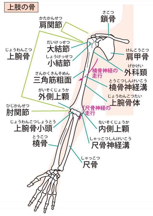 腱鞘炎へのアプローチ