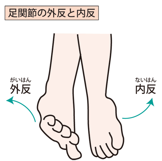 足首のイラスト